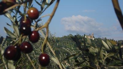 I Due Cipressi B&B sulle colline di Firenze